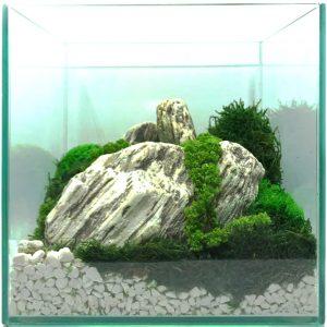 dekoracja z mchu