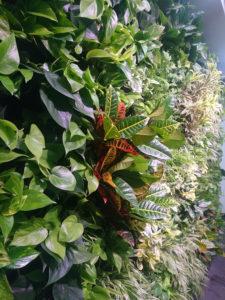 ściana z roślin