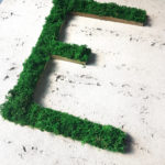 litery z mchu
