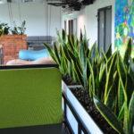 rośliny do biur