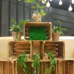 rośliny na wynajem