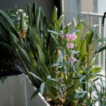 rośliny do wnętrz