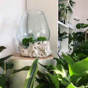 dekoracje z mchu